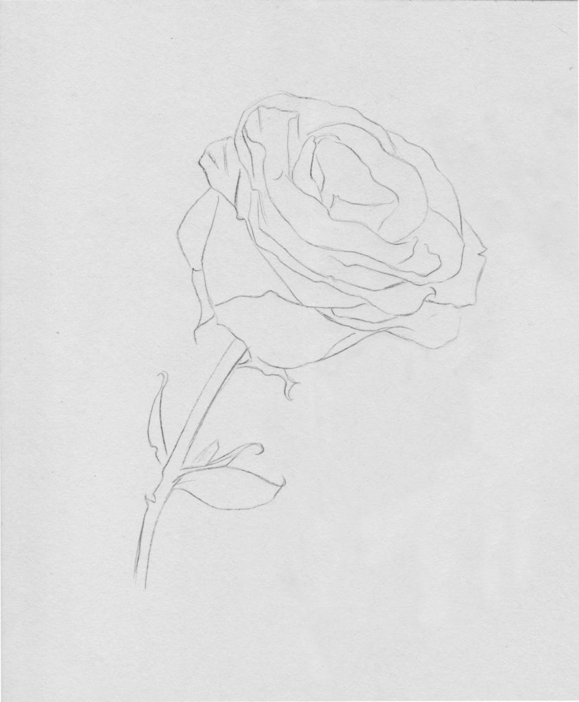 drawing roses in graphite pencil | Gigi Chen | Artists Network