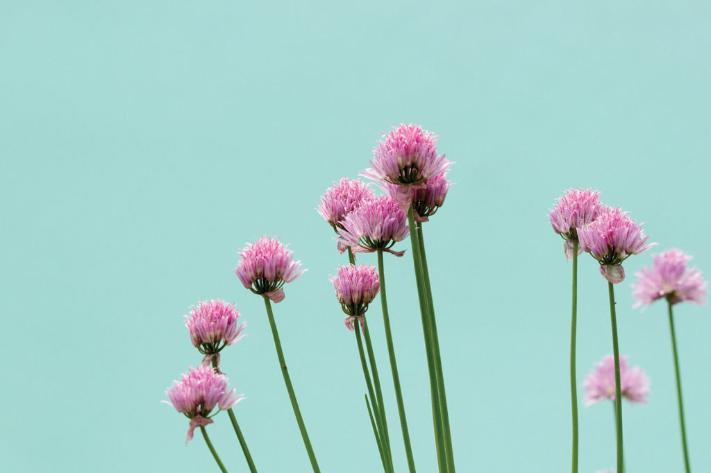 Photo of wildflowers by Getty Images | Floral Art Prompts and Tips | Artists Network