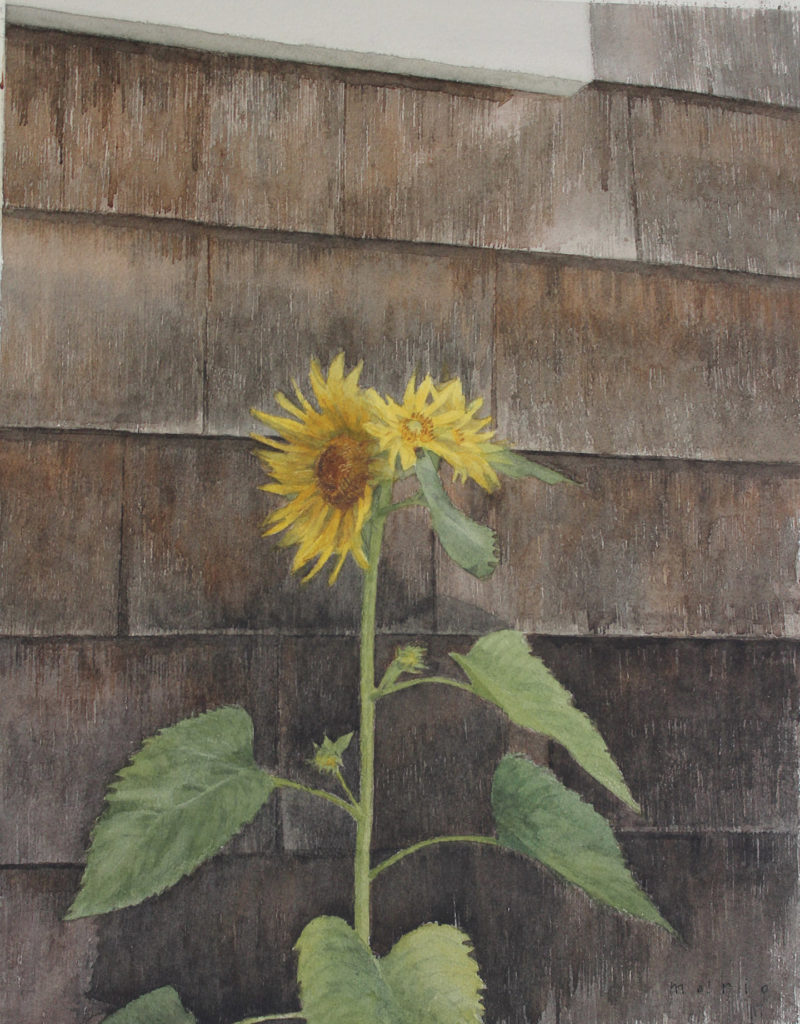 Wildflowers by Mario Robinson, Watercolor on Paper | How to Paint a Wild Sunflower | Artists Network