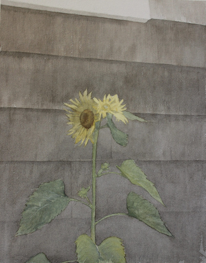 Step 5: How to Paint a Wild Sunflower by Mario Robinson | Artists Network