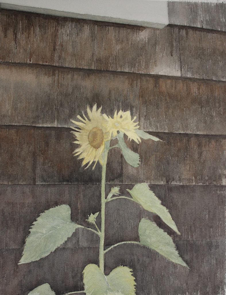 Step 6: How to Paint a Wild Sunflower by Mario Robinson | Artists Network