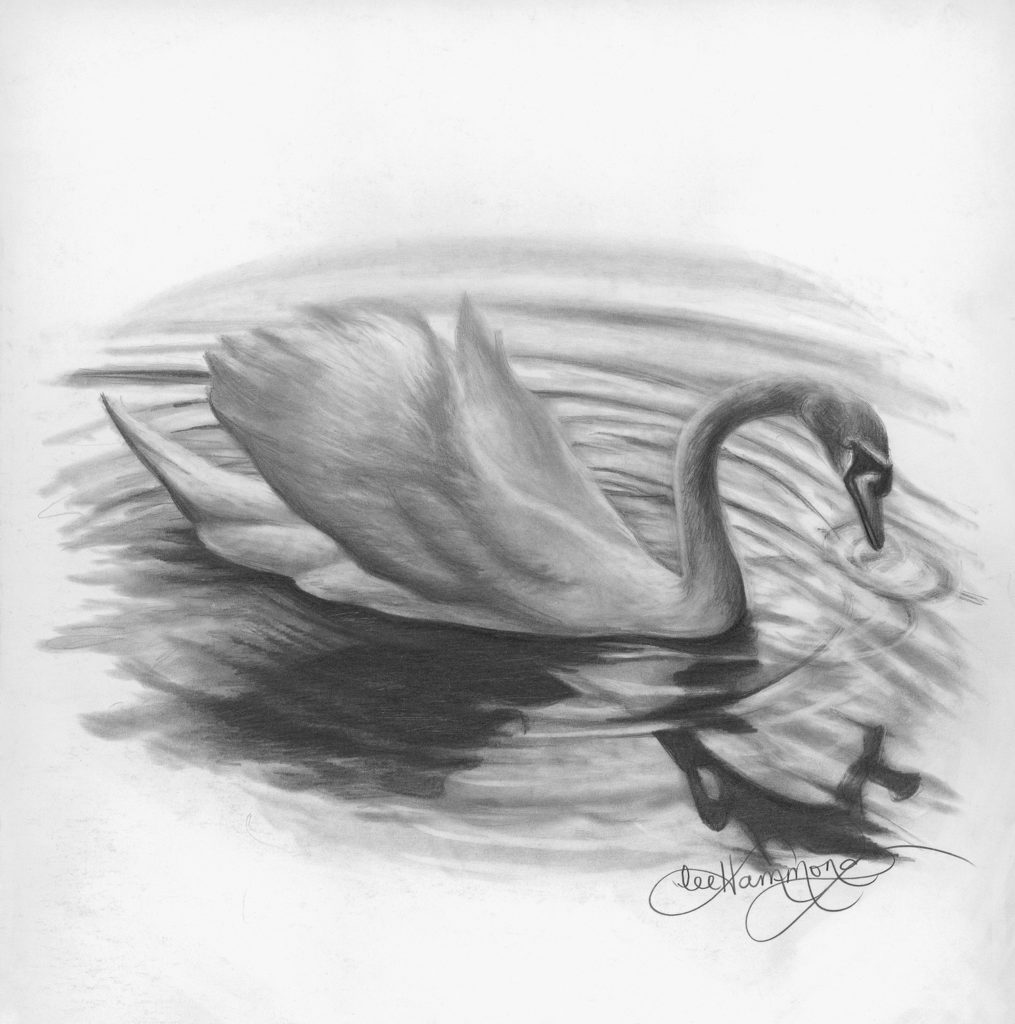 Swan by lee hammond graphite on smooth bristol graphite pencil drawing basics artists