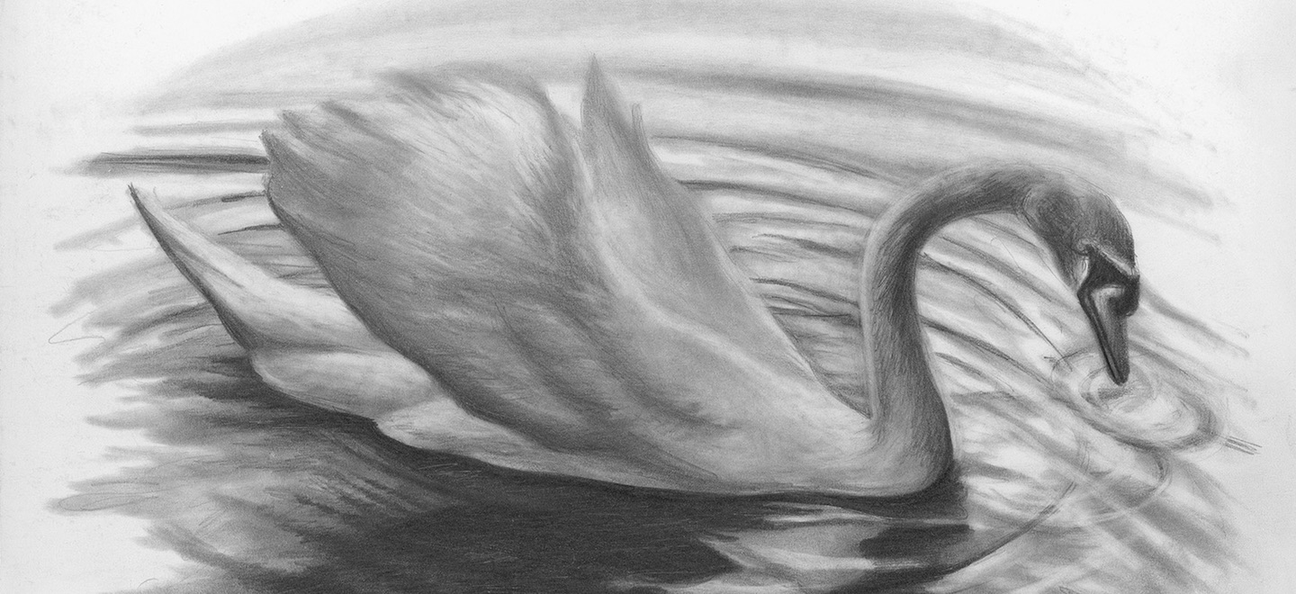 Cropped - Swan by Lee Hammond, graphite on smooth bristol | Graphite Pencil Drawing Basics | Artists Network