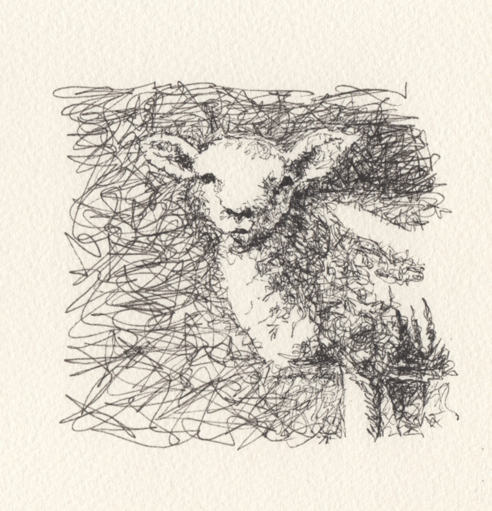 This lamb's head was drawn on rough watercolor paper so the texture breaks up the line.