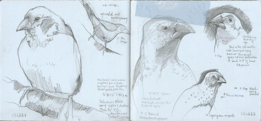 Bird Finches art sketches by Roz Stendahl
