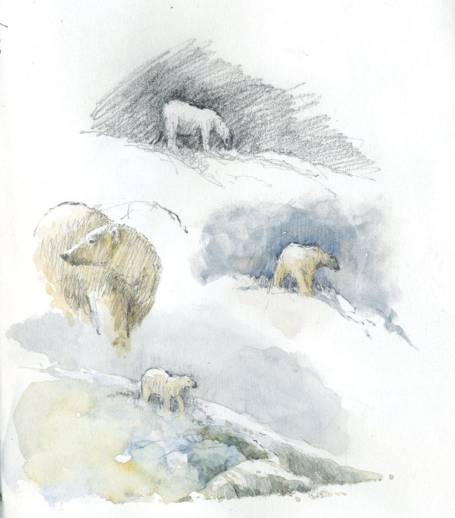 watercolor animals 2 Polar bear on the prowl