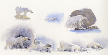 watercolor animals 3 Polar Bear montage